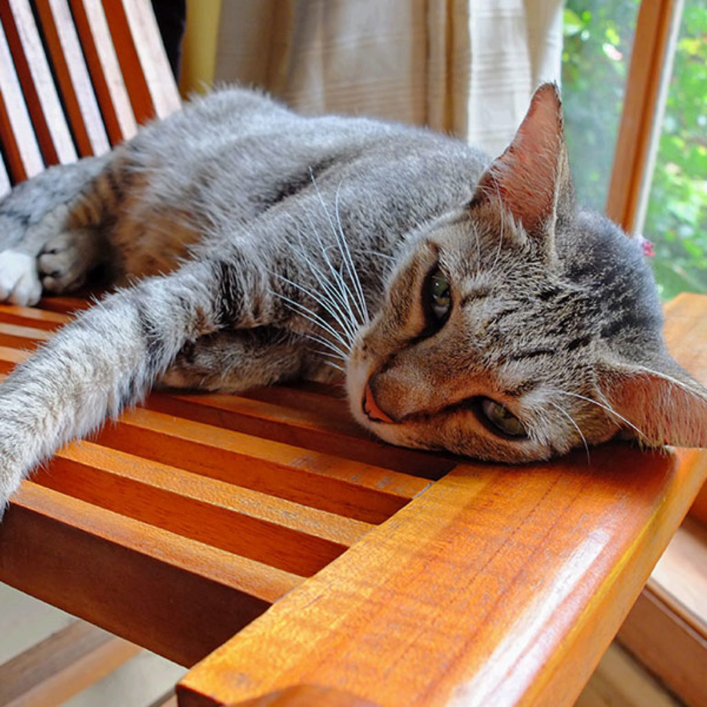 cat on wooden chair