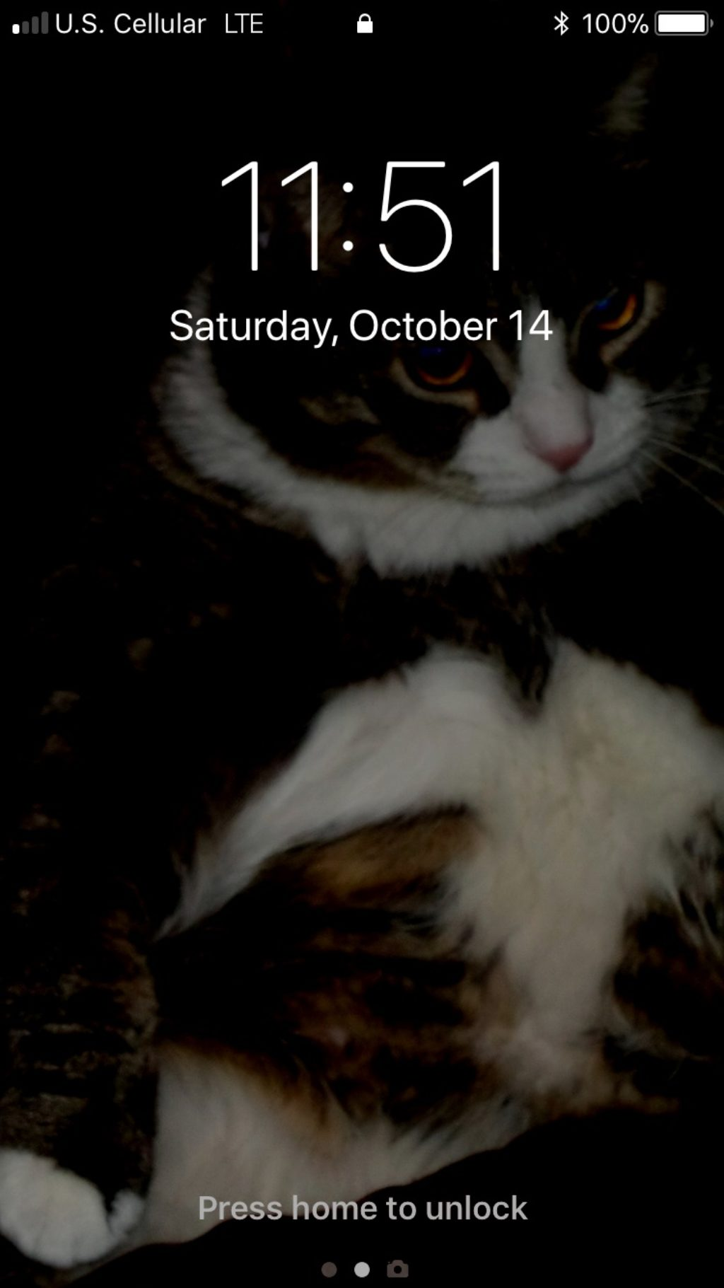 phone screen of cat
