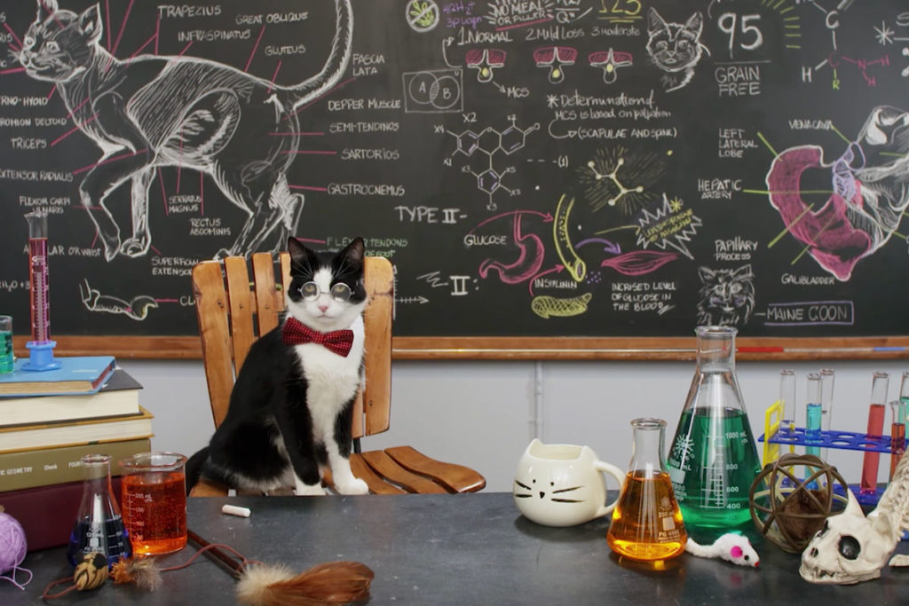 Purrfessor Cat™ in his lab with chalkboard