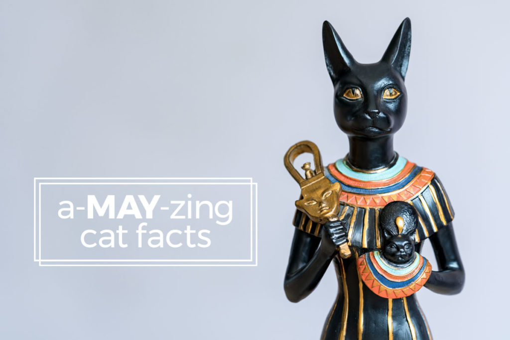 egyptian cat sculpture - a-may-zing cat facts