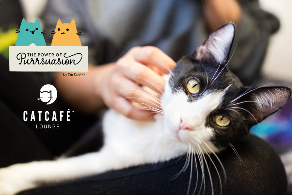 Dr. Elsey's Power of Purrsuasion at CatCafe Lounge