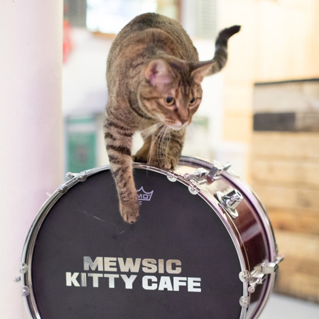 Mewsic Kitty Cafe cat on drum