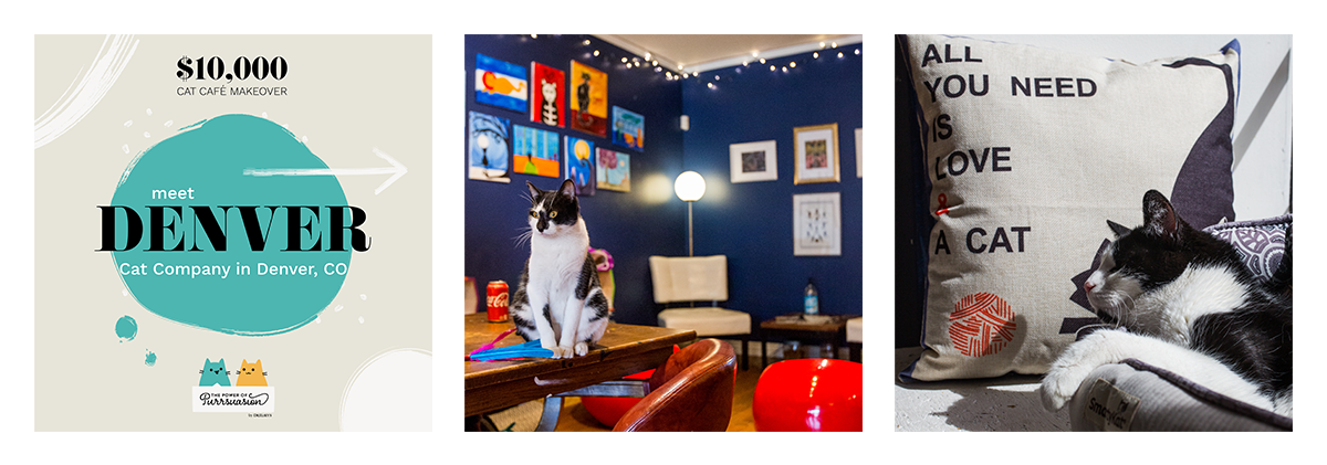 Meet Denver Cat Company in Denver, CO