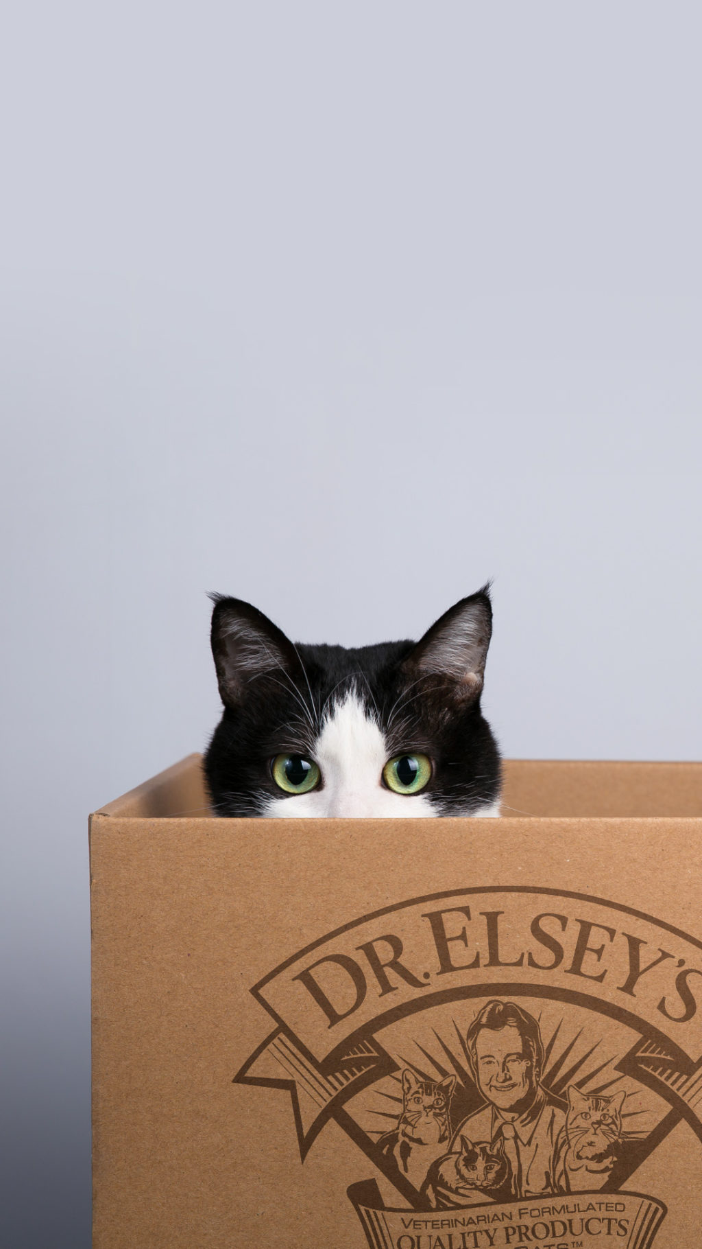 cat peeks out of cardboard box