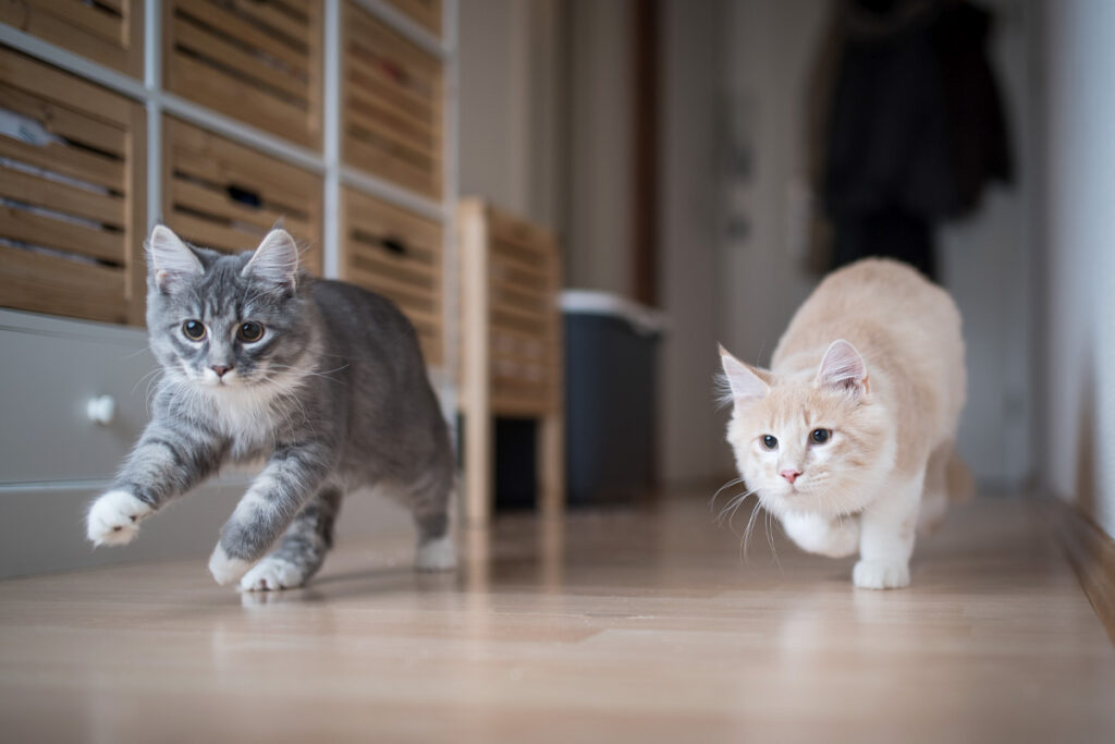 two cats running down a hallway