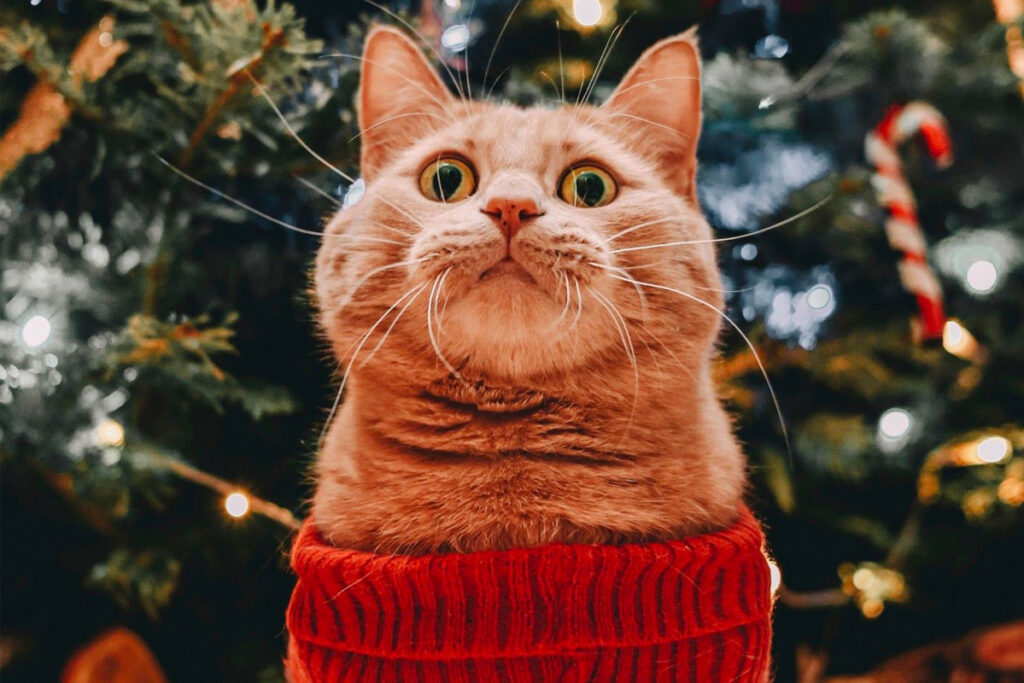 cat in christmas sweater staring up excitedly at holiday decorations