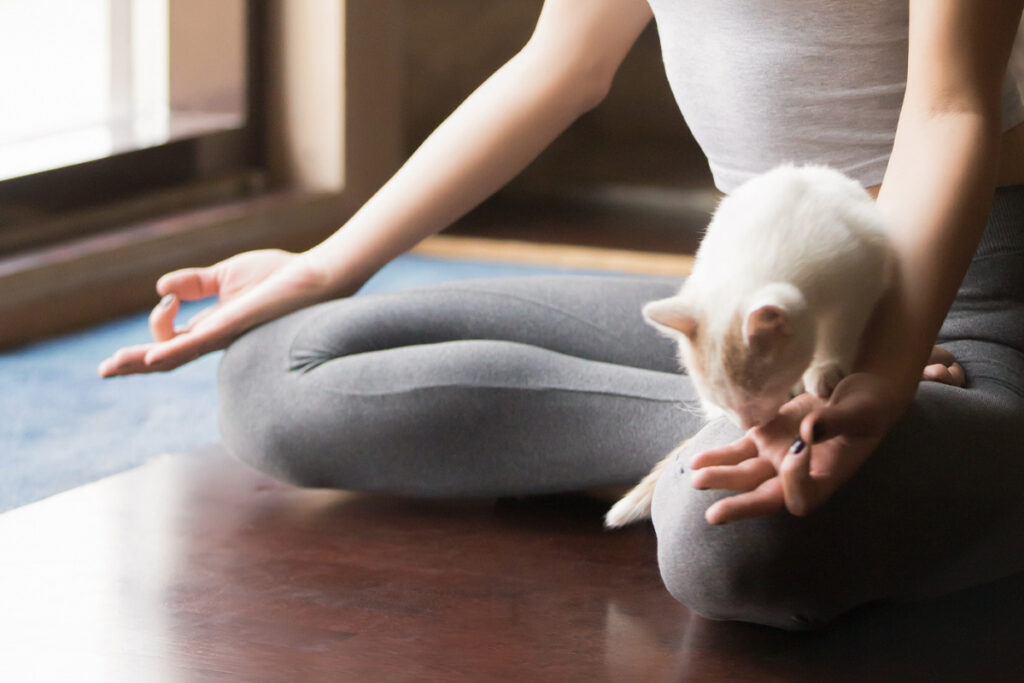 women doing yoga pose with cat on her knee
