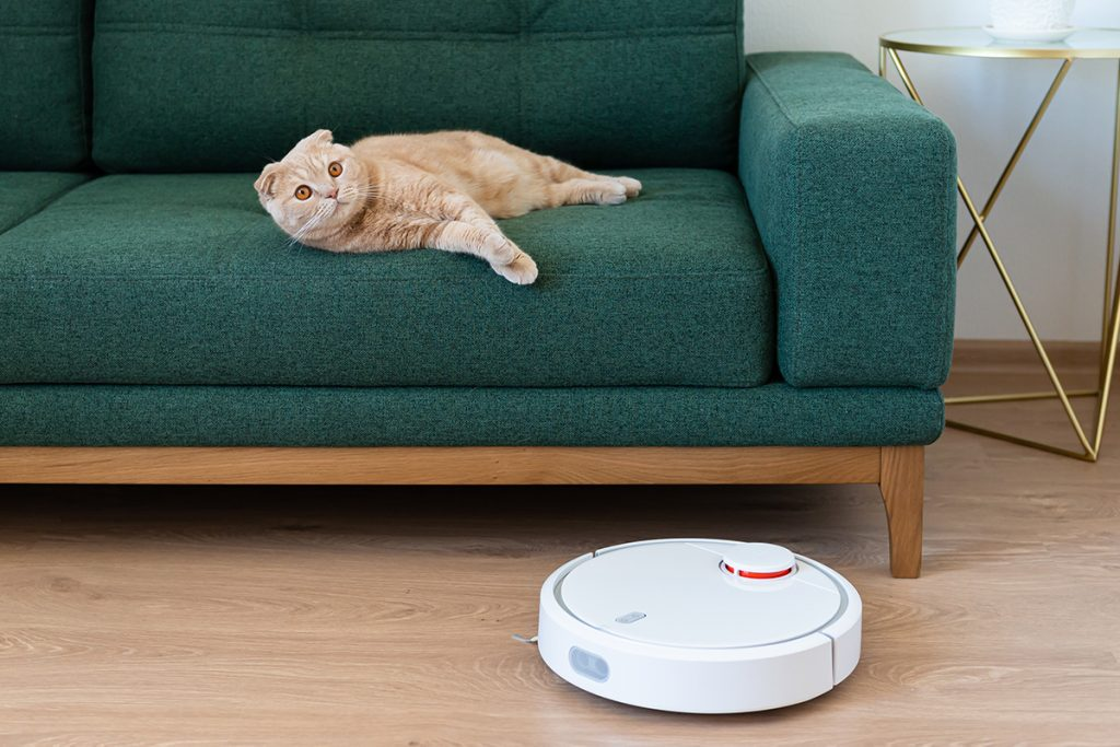 cat laying on couch with robotic vacuum passing by